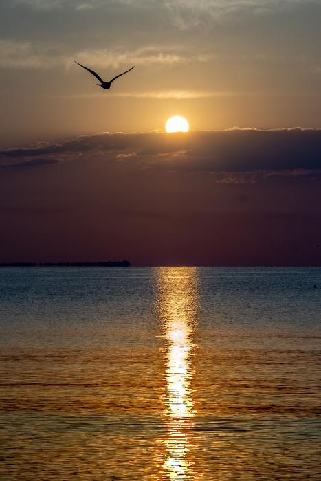 Sunrise Black Sea and bird