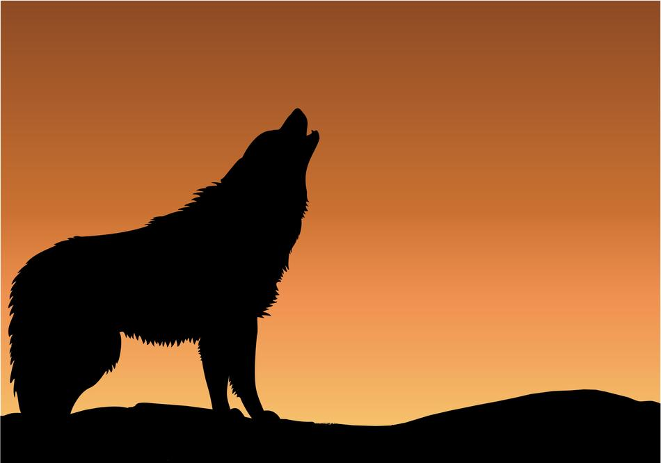 wolf howling sunset drawing