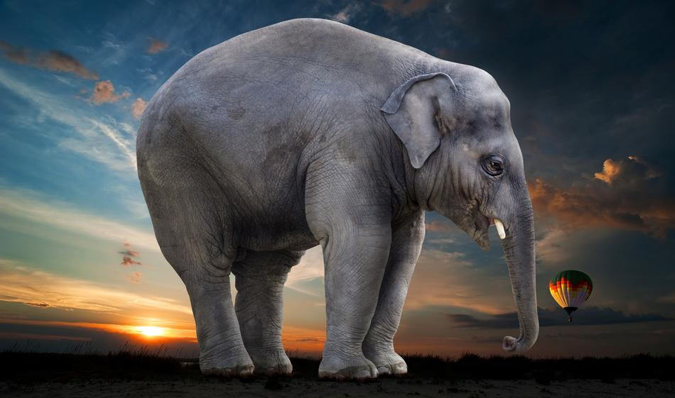 Elephant Sunset Steppe drawing