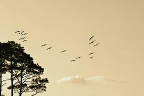Birds Formation Flying tree