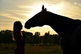 Sunset Horse and girl