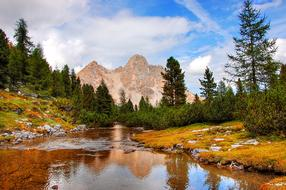 Dolomites water trees