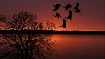 red Sunset Birds Flying and tree