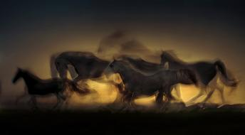 sunset saddle horses