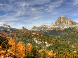 Dolomites Tofane trees Nature