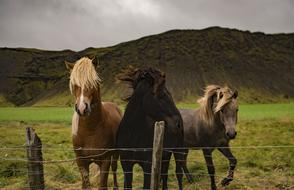 magnificent Horses Animal Brown