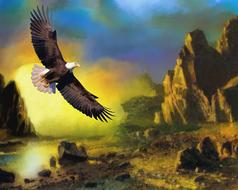 eagle wildlife sunset flying drawing