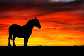 horse silhouette black red sunset