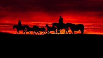 Sunset silhouette of a herd of horses