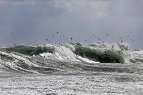 a flock of seagulls flies over the waves of the Baltic Sea