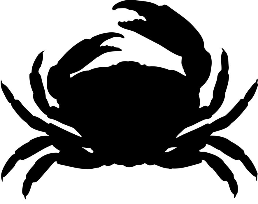 animal crab crustacean ocean drawing