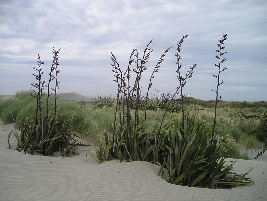 perfect South Island Desert