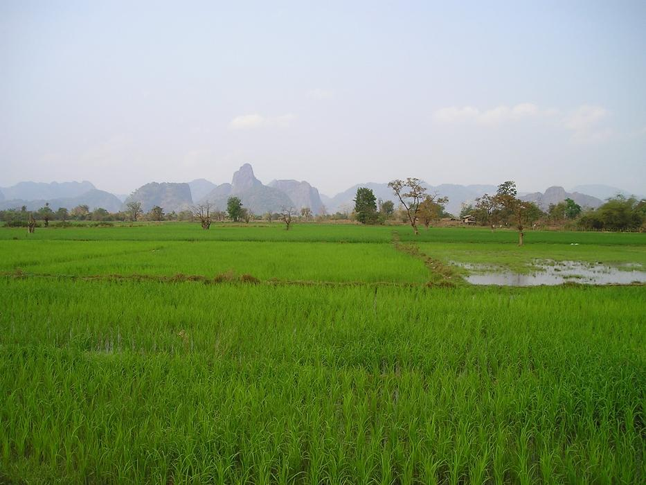 A photo of rice plantations in Laos, Asia