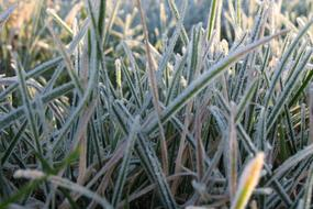 Frost Cold Grass white