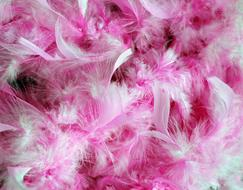 Pink and white Feathers, background