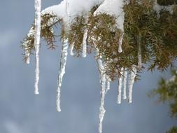 Icicle Winter