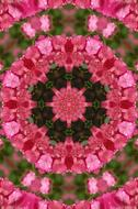 mandala flower pink black