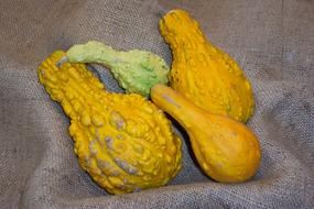 harvest of exotic yellow pumpkin