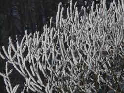 Beautiful tree branches with hoarfrost in light