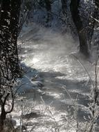 Watercourse Winter forest