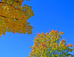 Autumn Leaves Fall and blue sky