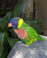 Bright Colorful Parrot green