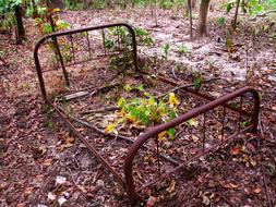 rusty bed frame in the forest
