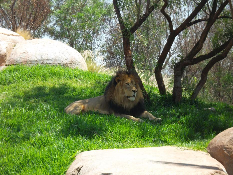 goodly Lion Africa Zoo