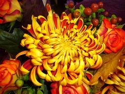 Chrysanthemum Flower and Yellow banana