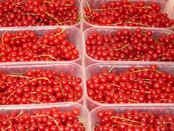 red Currants in boxes
