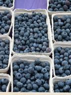 blueberries in cardboard boxes on the market
