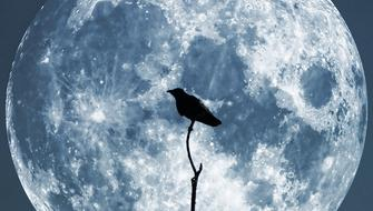 Moon Crow Sky dark