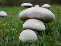 Mushrooms Fungus green grass