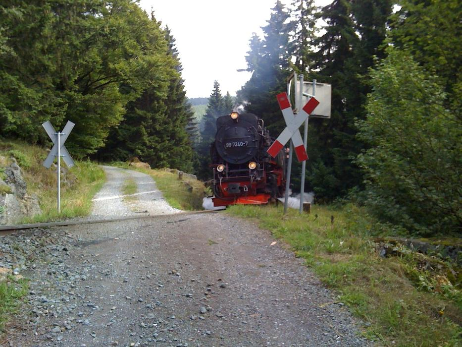 Narrow Gauge Train crossing path at forest