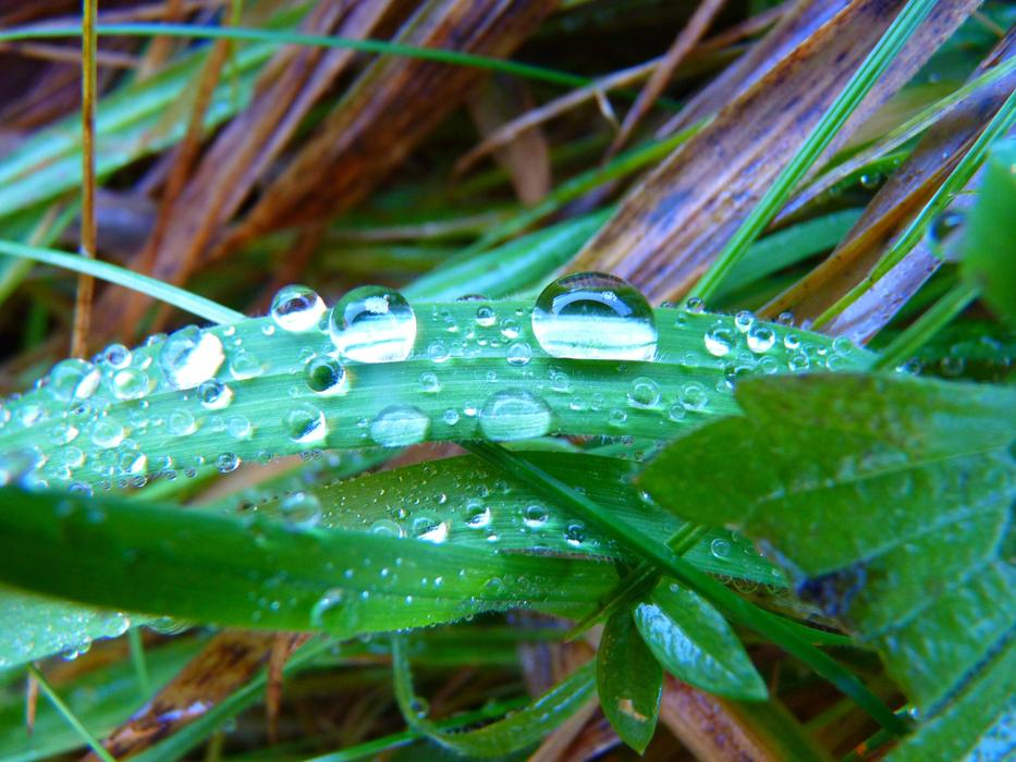 Blade Of Grass water drop
