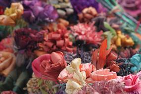 incredibly beautiful Paper Color flowers