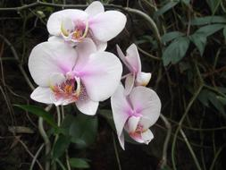 Orchid Flower White pink