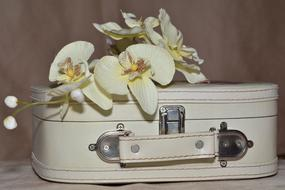 Luggage and Orchid Flowers