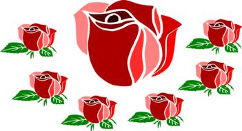 rose flowers romantic drawing