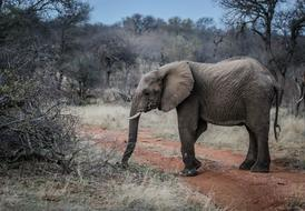 incredible Elephant Pachyderm