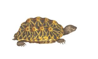 painted brown turtle on a white background