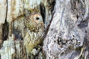 camouflaged owl on the tree