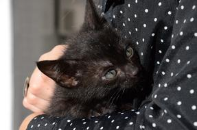 black kitten in her arms