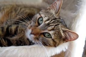 sweet domestic cat with green eyes