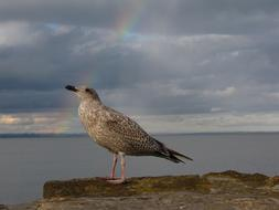 rainbow in the clouds above the seagull on the coast