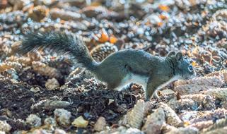 small squirrel on ground
