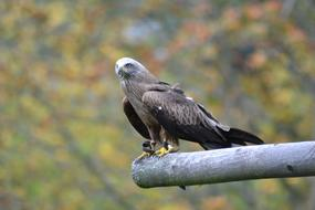 perched bird of prey outside