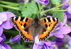 wild butterfly on the purple flowers