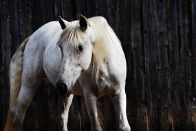 white horse stands near the fence