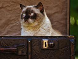 incredible Luggage Antique Cat British